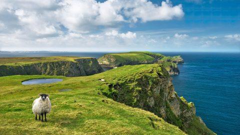 Cursos y escuelas de inglés en Irlanda